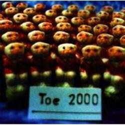 Toe 2000