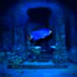 Ryukuyu Underground